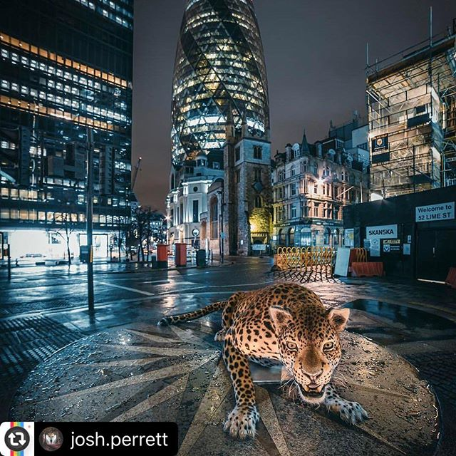 "Congrats @josh.perrett best of the night!!! #Reposting @josh.perrett with @instarepost_app -- This week @samhobsonphoto invited me along to assist on a photoshoot for @natgeo / @natgeowild .... We spent the night in London, with Lilly the animatronic leopard (as pictured), in order to capture some promotional images for ""big cat week"". It is safe to say I was more than excited at the chance of working for the National Geographic as they are one of my favourite companies in the world.  I can only hope to work with them again. Whatever happens, this opportunity has topped everything I've done in photography and it will be hard to beat but that's all the motivation I need!  Follow @samhobsonphoto if you like wildlife photography as his work is incredible 🙌."