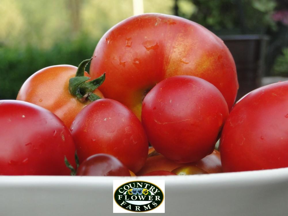 Tomato_with_Logo.JPG