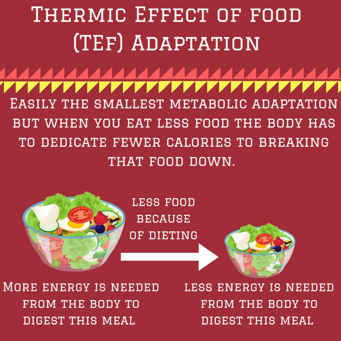 Thermic Effect of food (TEF) Adaptation.png