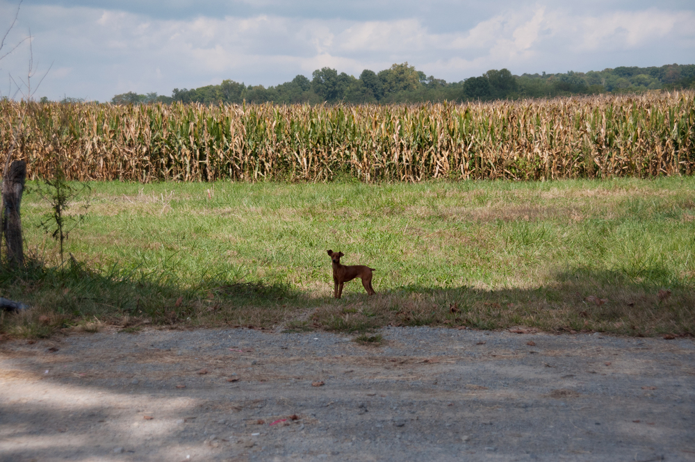 Lost Doggie.jpg