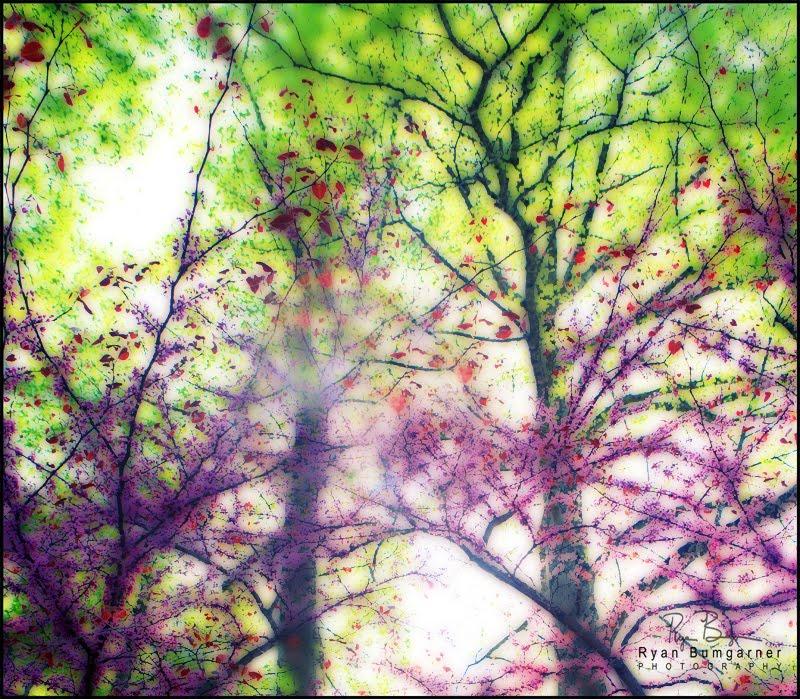 Spring_Glow.jpg