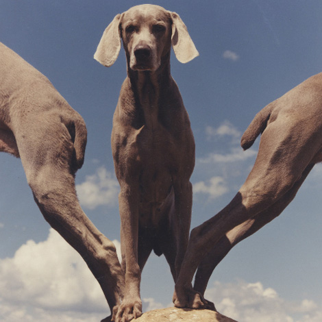 "William Wegman, ""W"", 1999"