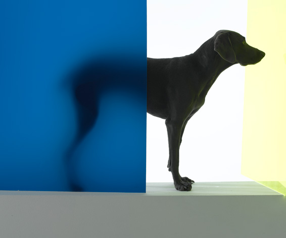 William Wegman, New Dawn, 2006