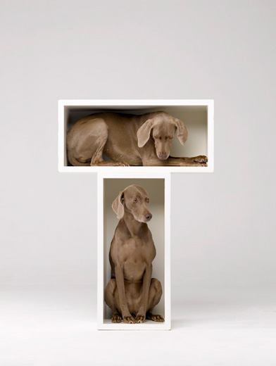 William Wegman, Split Level, 2010
