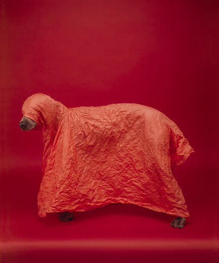 William Wegman, Tent, 2008/2010