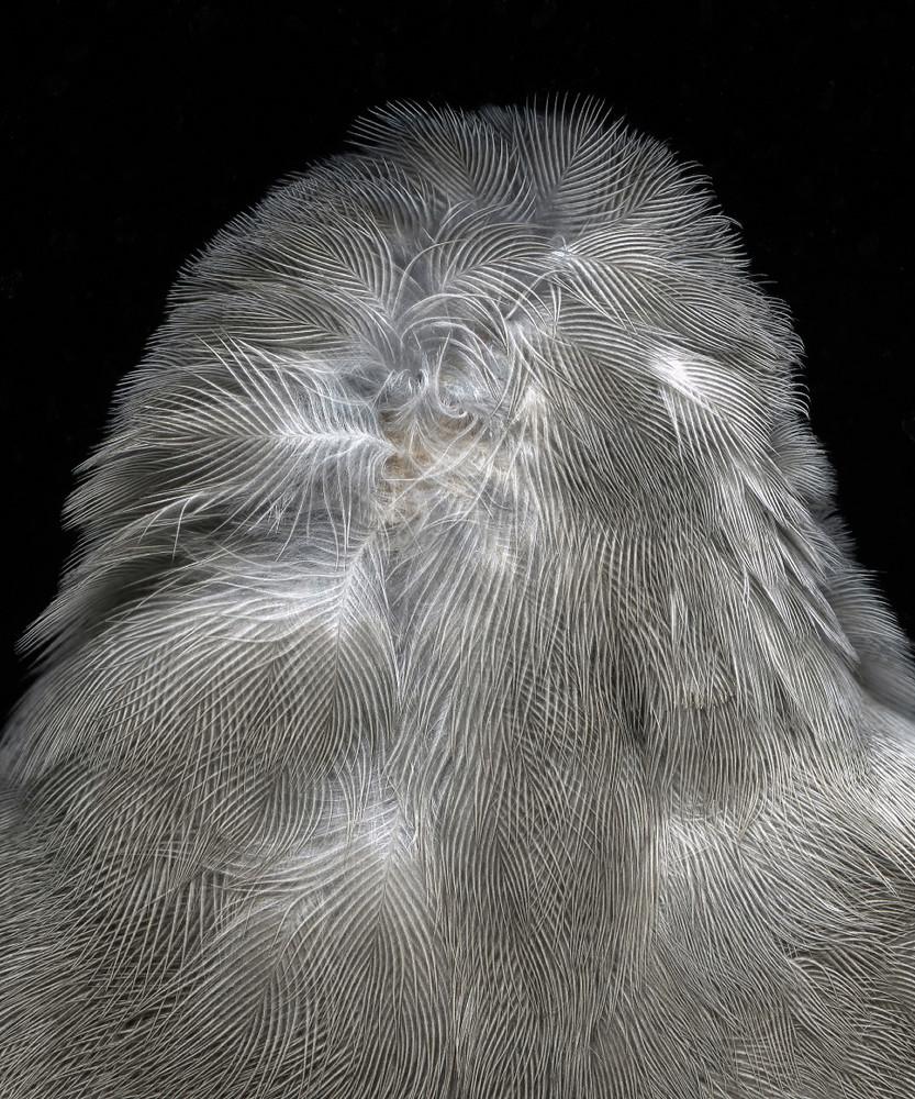 Fauna Grand Prize winning image by IRENE IMFELD