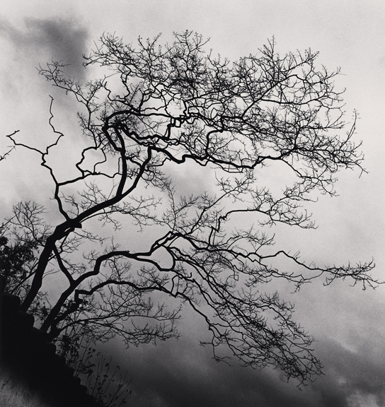 Temple Trees, Nara, Honshu, Japan. 2002  © Michael Kenna