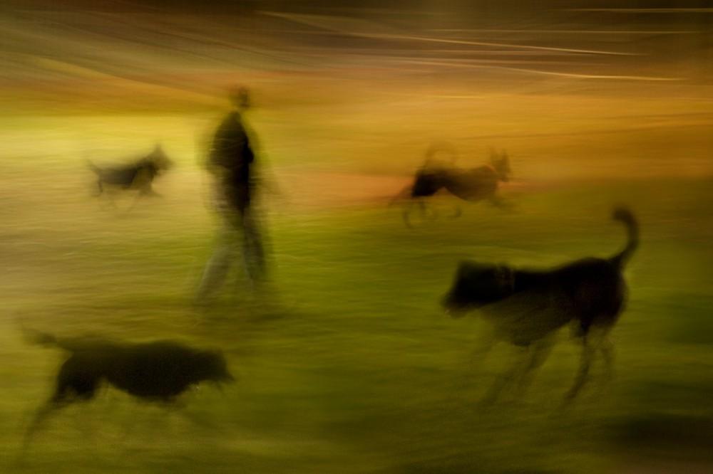 © Susan Bein
