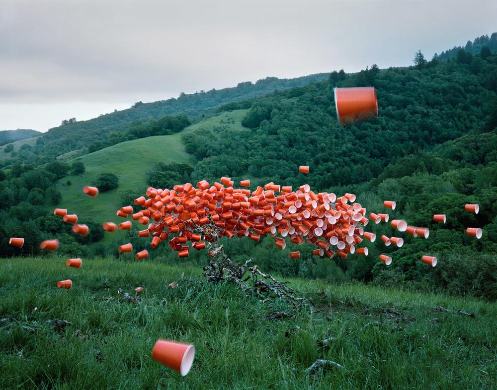 © Thomas Jackson Cups Over Marin, 2014