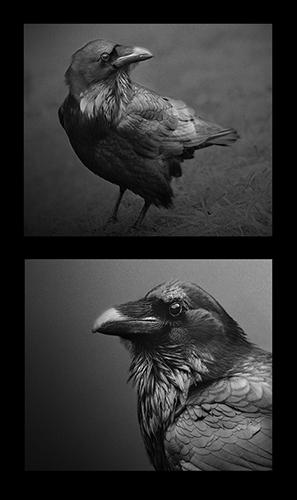 © Beth Moon  Ravens