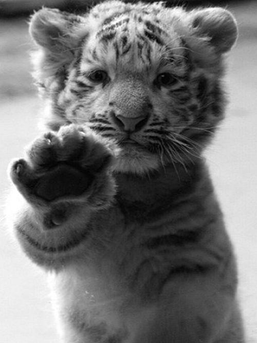 KittenHands.jpg