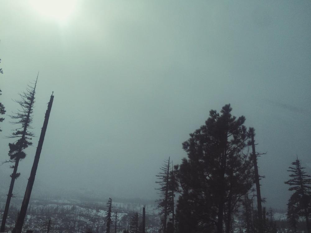 dreary & wonderful (Near Mt. Hood)