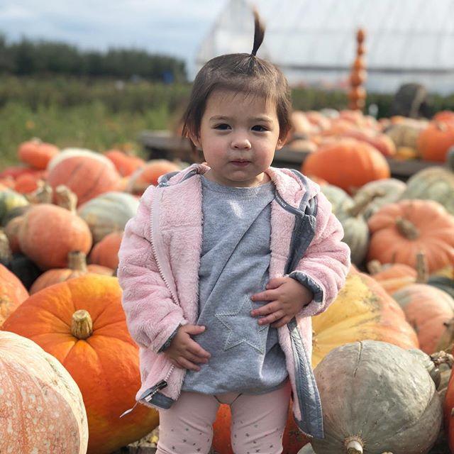Our favorite little pumpkin! #avacharlotte #18monthsold #ilovefallmostofall #pumpkinpatch
