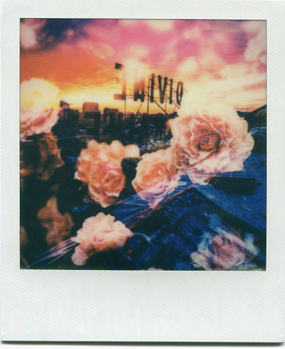 Divine Roses.jpg