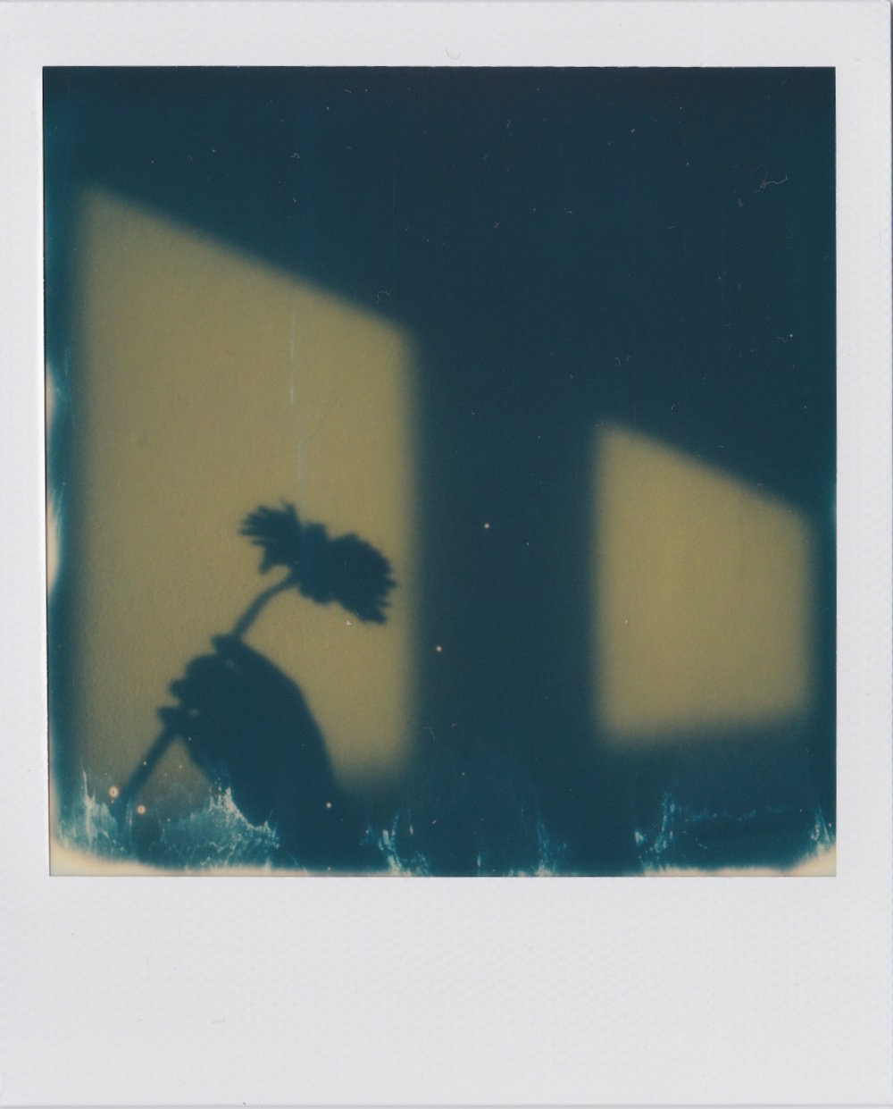 """Pick up a Flower"" byFabio Menghinasso"