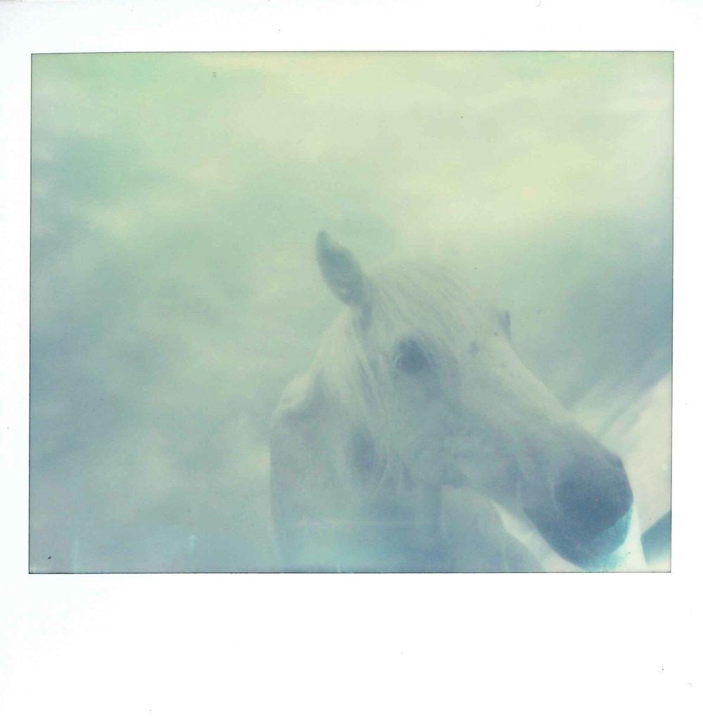 """""""Within the Light"""" by Amanda Pendlebury"""