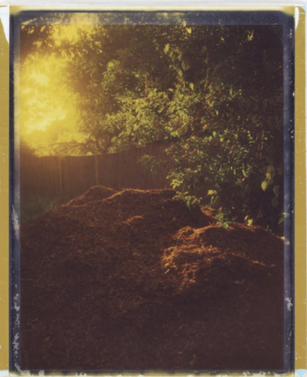 """Mulch, at Evening"" byKristinRandall"