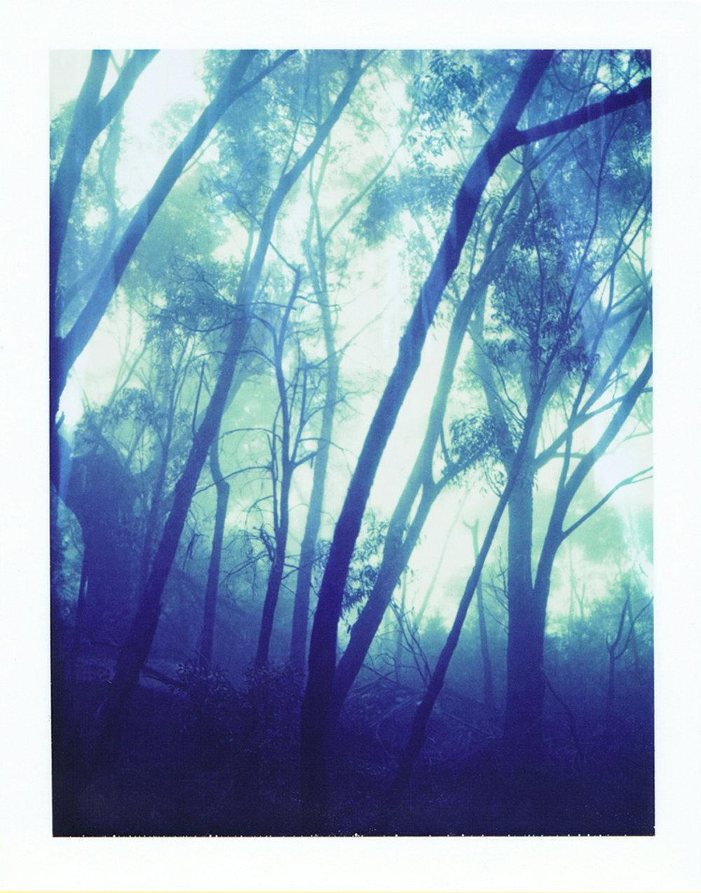 Fogtrees669slant1.jpg