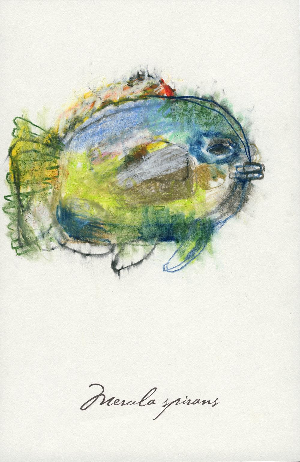 onefish.jpg