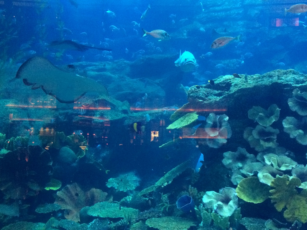 More Aquarium - This is another thing to add to your list if you are in Dubai.