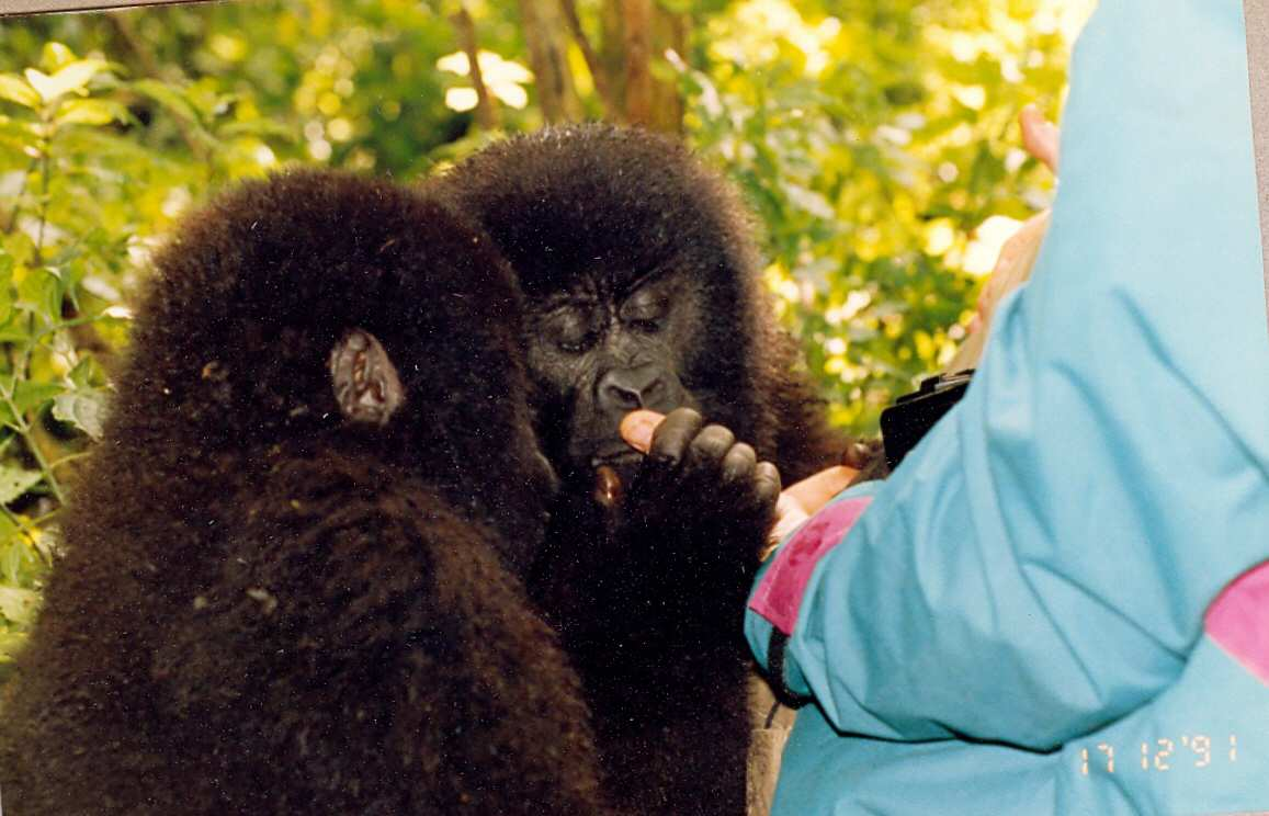 Zaire Virunga NP Teens that caused the charge when they tried to steal the camera bag