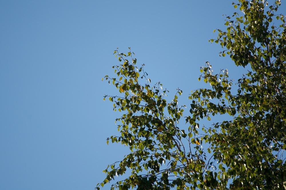Ļoti tāli koki, nekādus kropļojumus vai violetās malas neredz