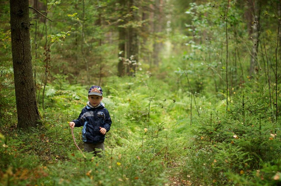 Ķirbižu meža taka