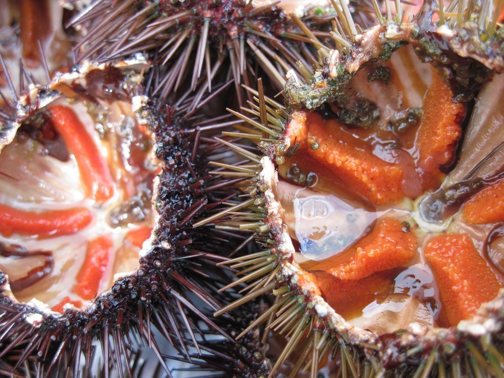 sea-urchins-1177788_1920.jpg