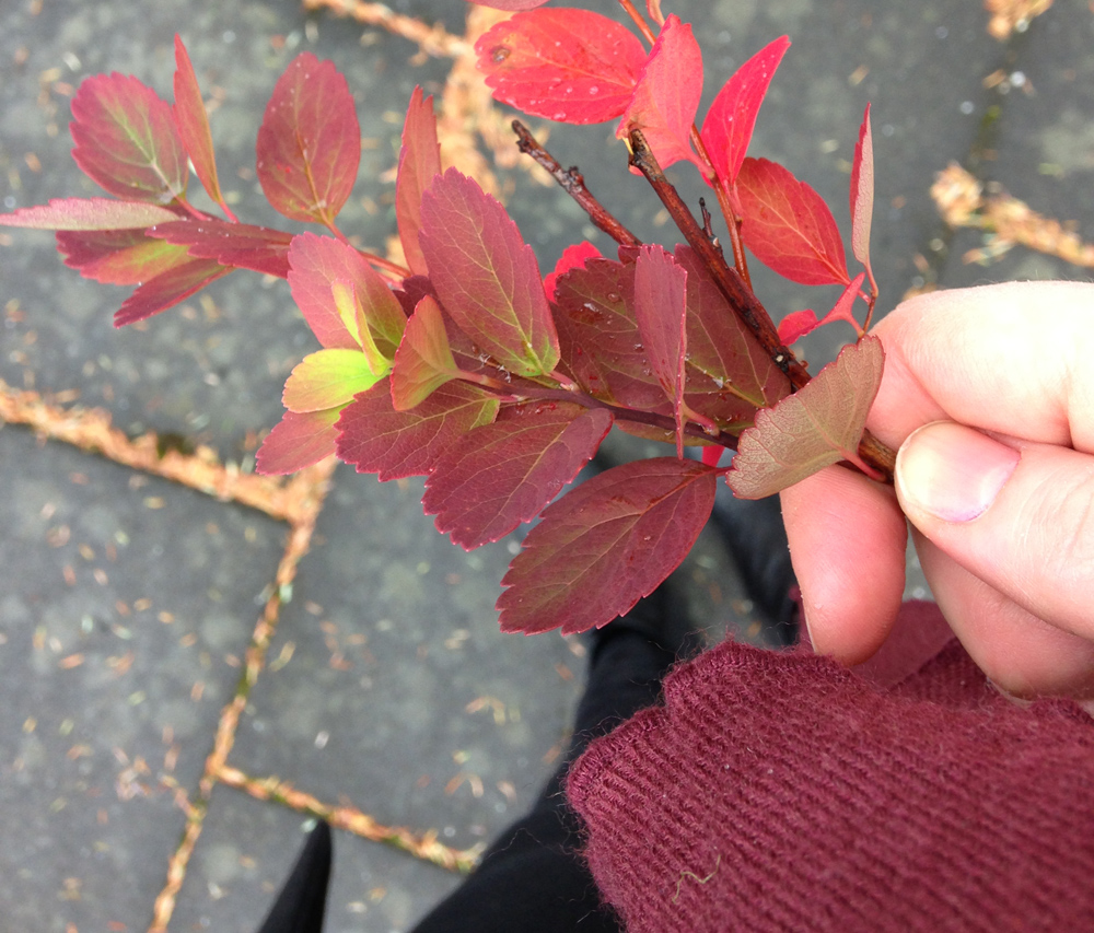 autumn7_bjorg.jpg