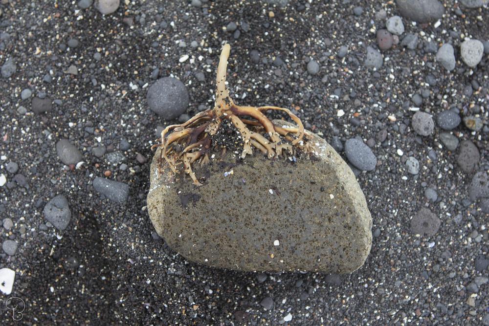 steinn.jpg