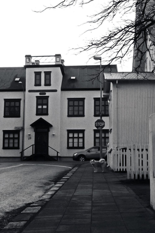 Reykjavik-35mm-filmography-film-photography-bjorggunnarsdottir