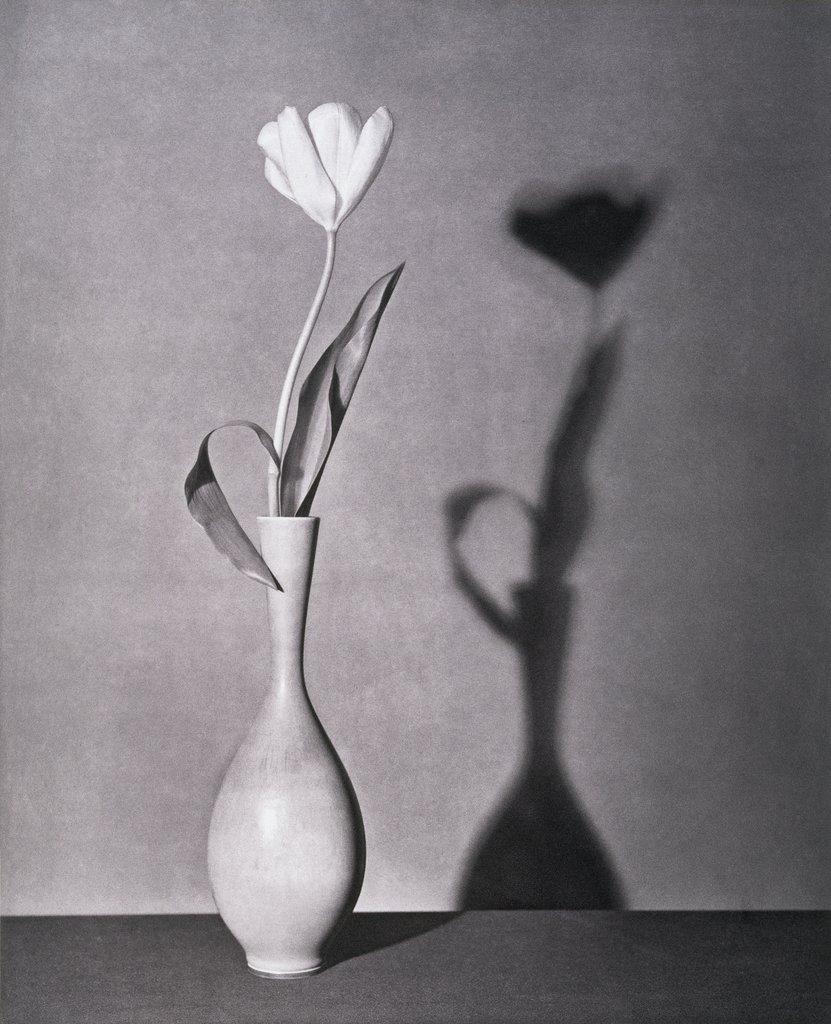 robert-mapplethorpe-tulip-photography