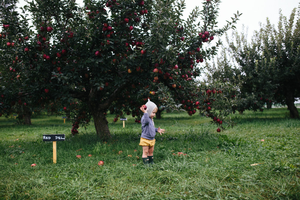 Apple Picking 16'-14.jpg