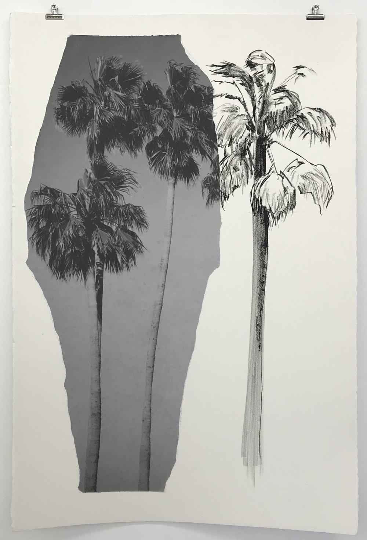 Palms Found.JPG