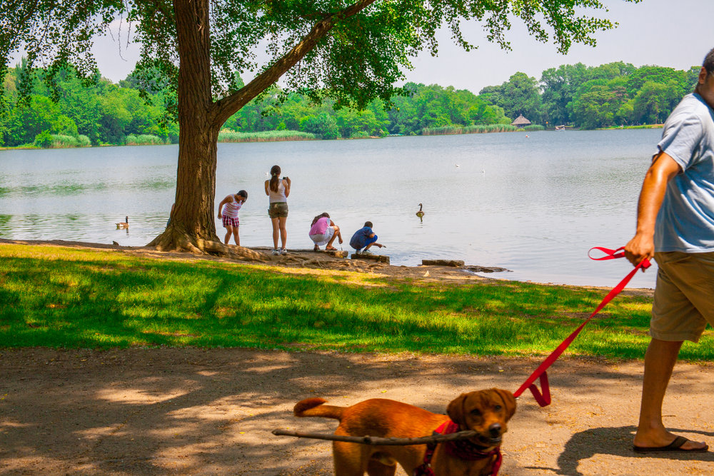 Lets_See_NY_Propsect_Park_Summer-2.jpg