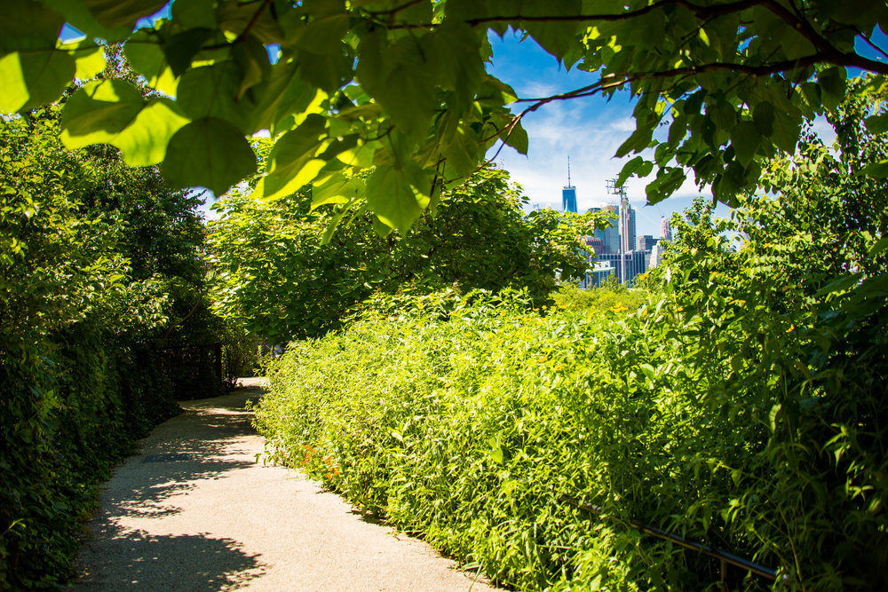 LSNY_Brooklyn_Bridge_Park-29.jpg
