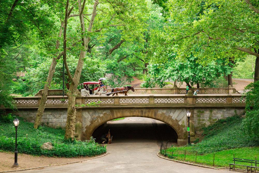 LSNY_Central_Park-2.jpg