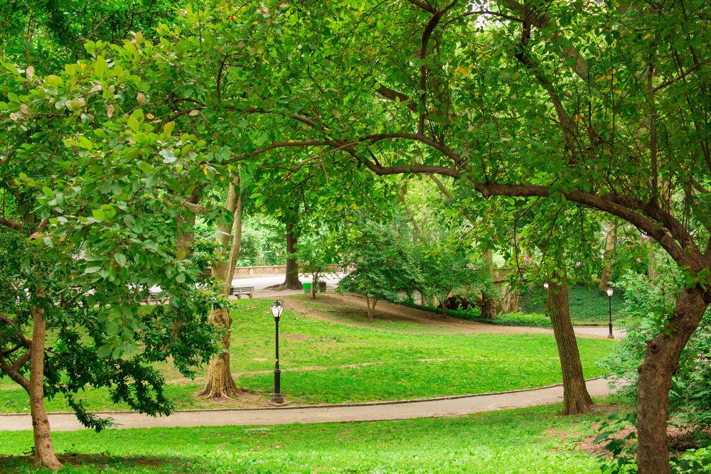 LSNY_Central_Park-1.jpg