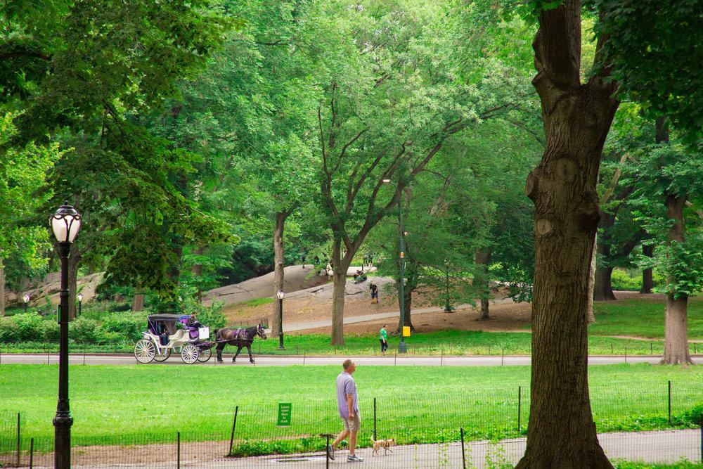LSNY_Central_Park-4.jpg