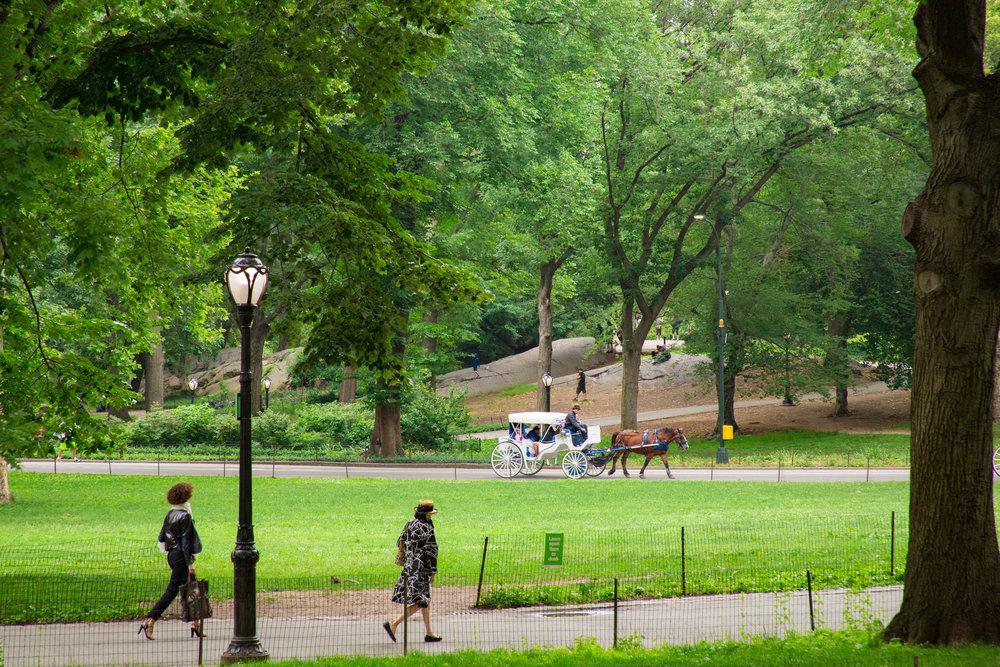 LSNY_Central_Park-5.jpg