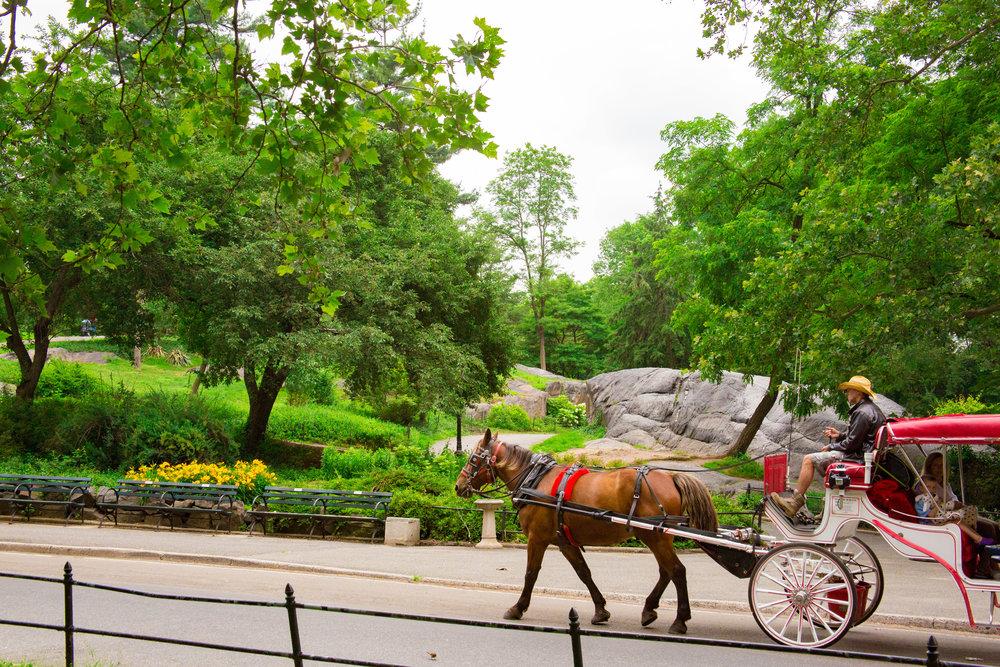 LSNY_Central_Park-9.jpg