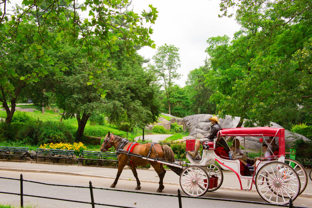 LSNY_Central_Park-10.jpg