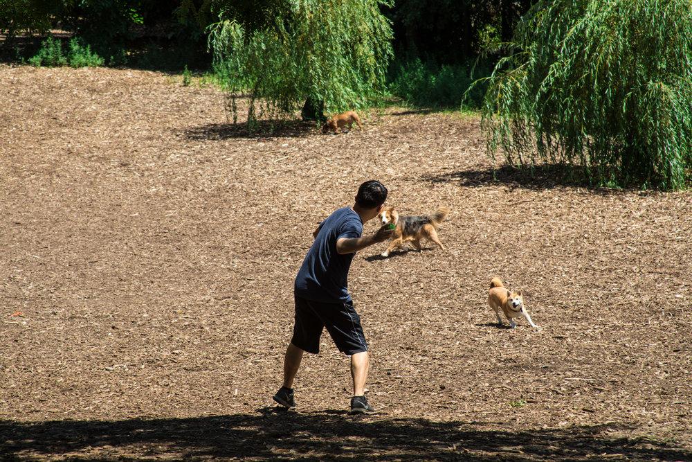 LSNY_Dog_Park-3.jpg