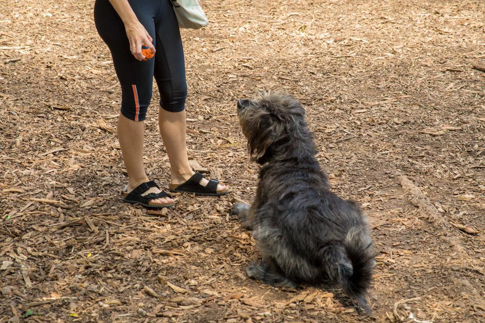 LSNY_Dog_Park-7.jpg
