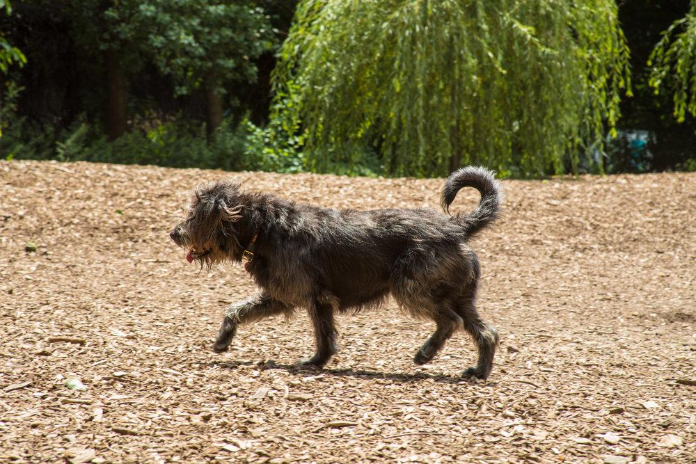 LSNY_Dog_Park-9.jpg
