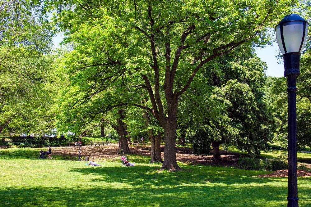 LSNY_Fort_Greene_Park-7.jpg