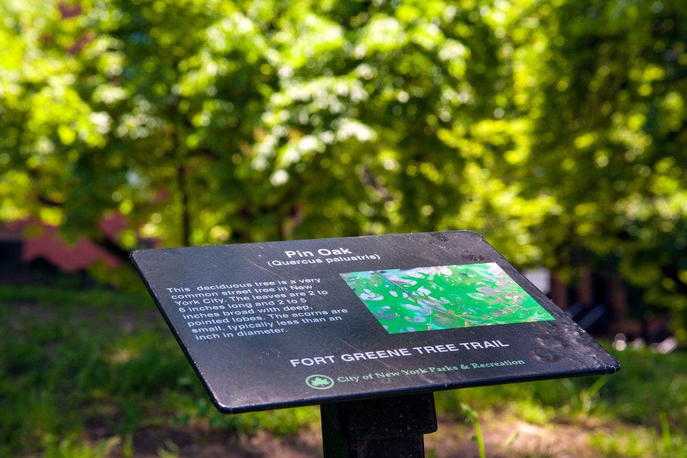 LSNY_Fort_Greene_Park-23.jpg