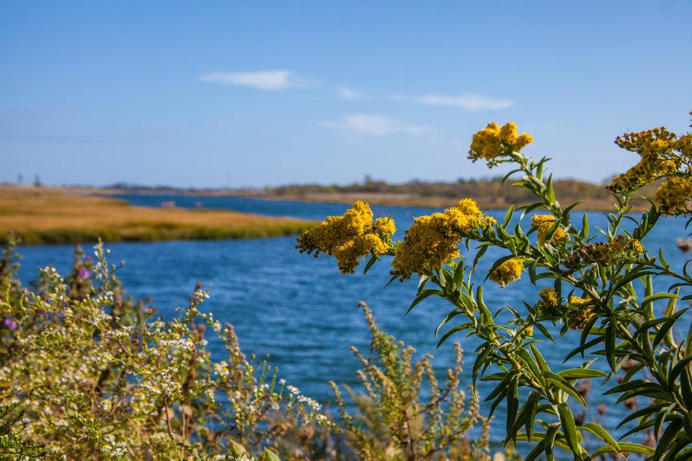 Nature Preserve -