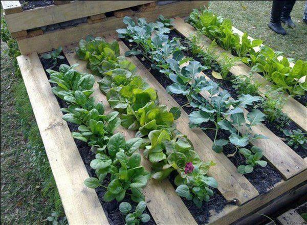 Garden Guides: Gardening with a Pallet