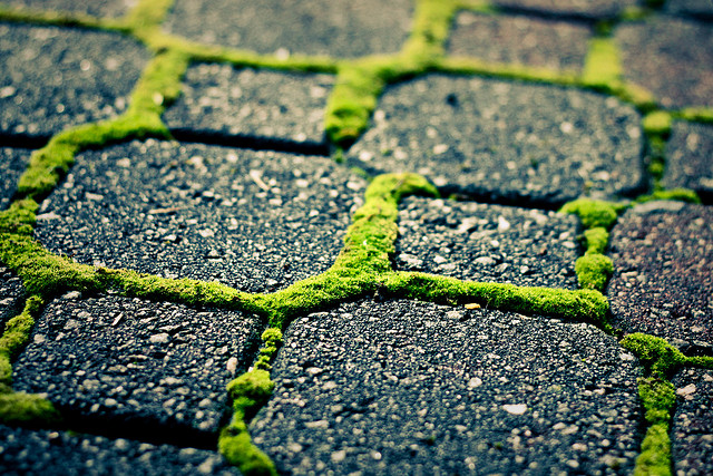 Bright green moss between these pavers has an almost magical quality to it.  Photo by  Basheer Tome